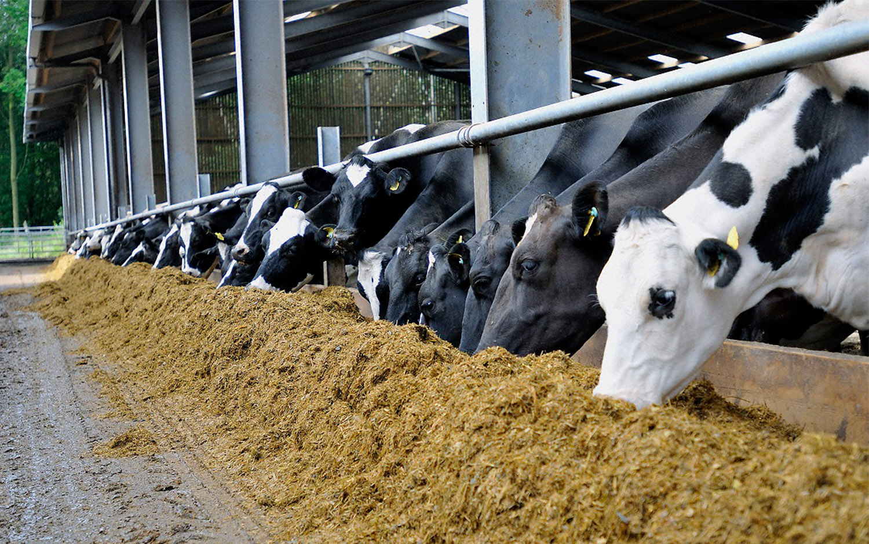 Innovative animal feed solutions